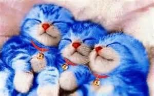 kucing biru